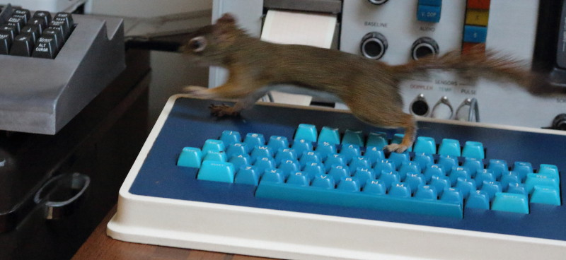 rat on keyboards.JPG